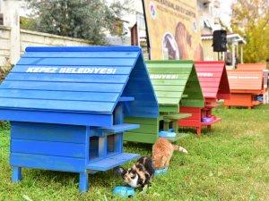 Kepez'in kedileri  EV'lendirildi