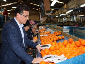 Portakal bahçelerinin  sigorta süresi uzatıldı