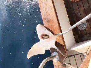 Antalya'da köpek balığı yakalandı