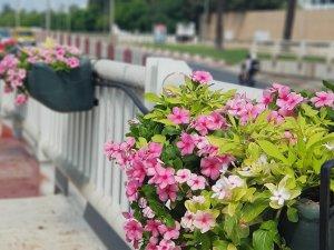 Büyükşehir Belediyesi kenti çiçeklerle donattı