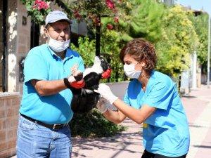 Konyaaltı Belediyesi'nden kuduz aşısı çalışması
