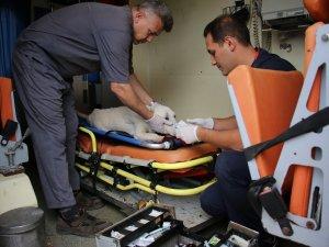Hayvan ambulansı ile ölümler azalıyor