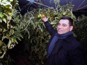Tütüncü çiftçilerle 'Zirai don' nöbetinde