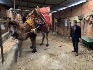 Uslu'dan deve besicilerine ziyaret