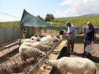 Koyunları telef olan ailenin hüznü sevince döndü