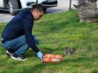 Muratpaşa'dan sokak hayvanlarına mama desteği
