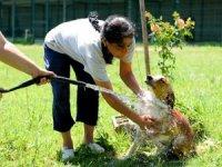 Sokak hayvanlarına sulu serinlik